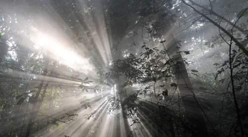 Однажды в лесу (Il était une forêt, 2013) трейлер фильма на русском